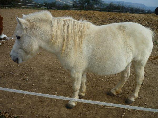 les poneys du Badour