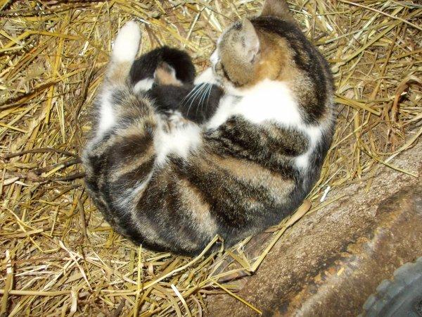 petits chatons de Cara