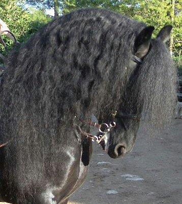 Quand un cheval te respect