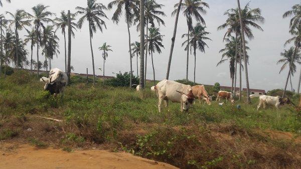 Séjour en côte  d ivoire