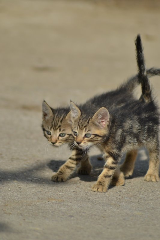 Petits chats de l'écurie