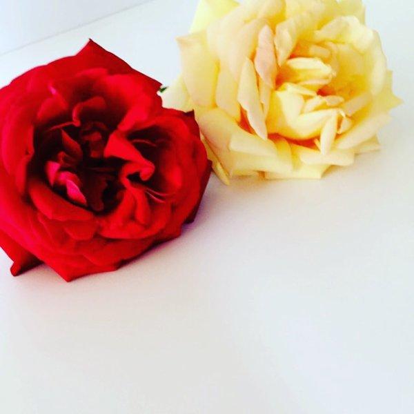 Chaque rose a son parfum, sa beauté, son essence.