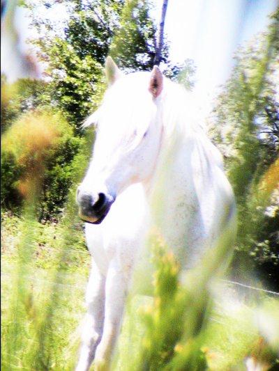 Le paradis sur terre est sur le dos d'un cheval.