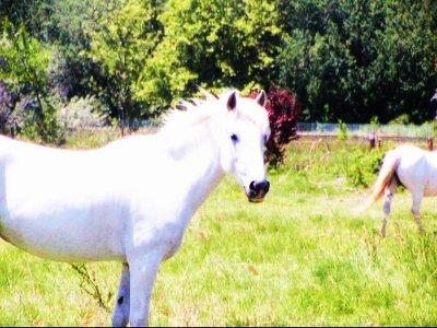Ah, cette petite émotion qui m'étreint lorsque je m'approche d'un cheval et que nos regards se croisent ! Il renâcle alors, je flatte le velours de ses naseaux et mon coeur bat. B. Mols