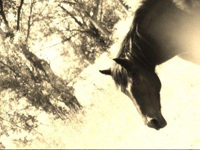 """""""Le cheval est bel et bien l'être qui m'a donné l'humanité, celui qui donne un sens a ma vie et qui m'empêche de n'être que """" simplement une femme""""."""