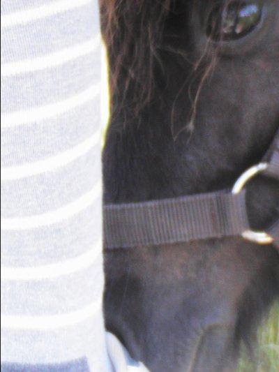 C'est à l'homme d'apprendre à parler cheval, pas l'inverse.