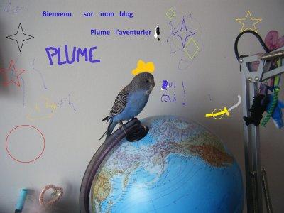 Bienvenue  chez                        Plume l'aventurier!      et                Caramel   le sportif!
