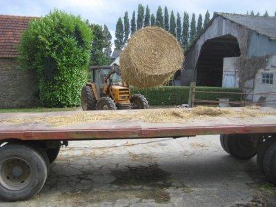 ramassage de la paill avec ford et plateau 16 bottes