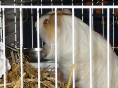 minouche dans  sa cage