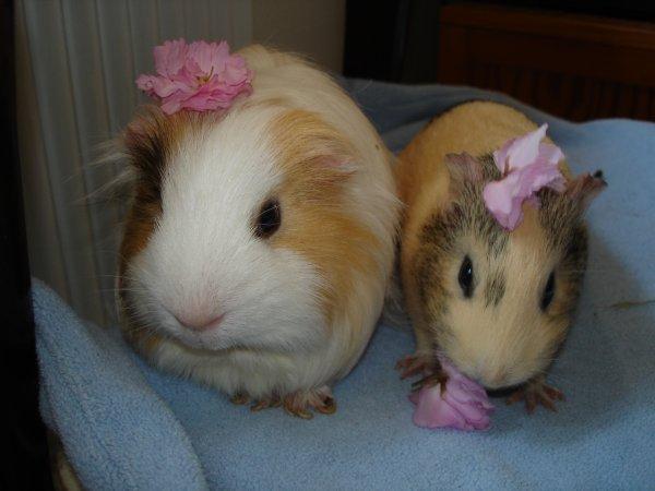 vanille et mimi: fleurs et miam !