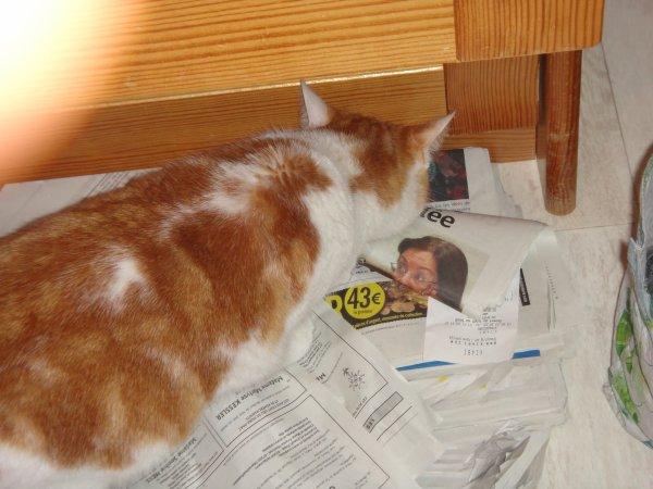 Tigrou lit le journal