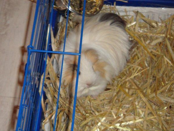 Mimi dans sa cage ...