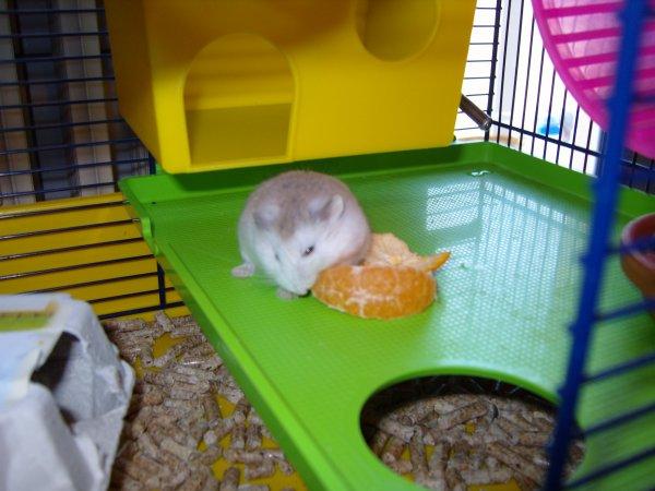 Albert mange une clémentine