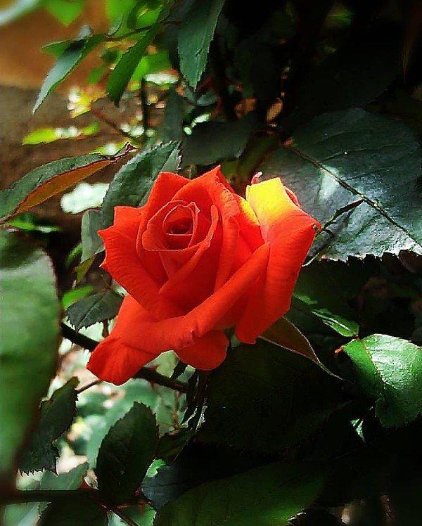bonjour ! je souhaite à tous mes ami(e)s un agréable lundi... et un excellent début de semaine ...bisous Colimar