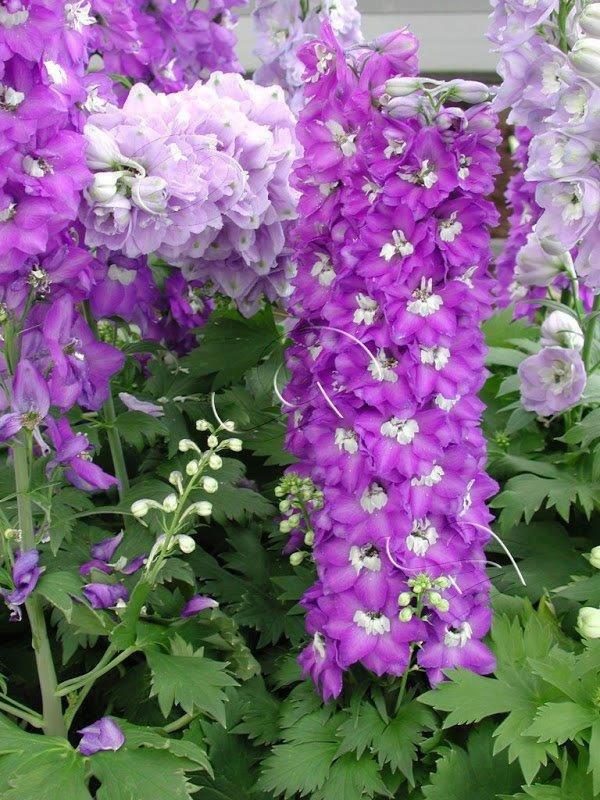 bonjour à tous mes amis(e)s .. je vous souhaite un joyeux mercredi ensoleillé .. bisous Colimar