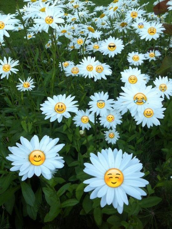 bonjour ! je souhaite à tous mes ami(e)s un agréable lundi, un bon début de semaine et un excellent mois de Septembre ...bisous Colimar