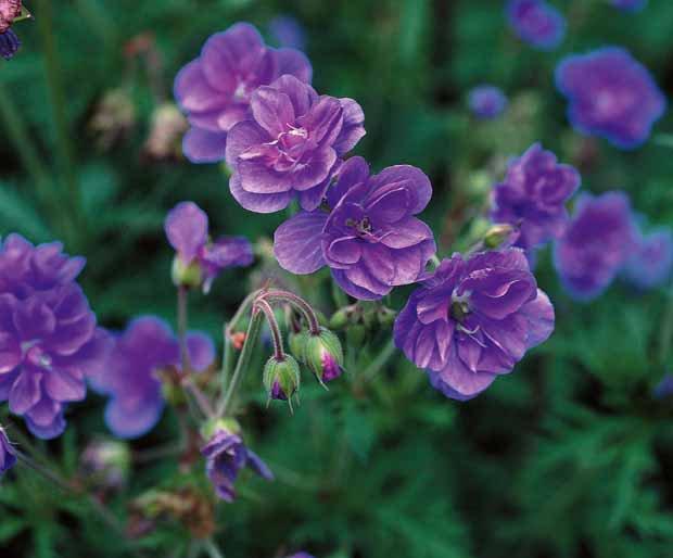 bonjour ! déjà mardi ..je souhaite à tous mes ami(e)s que cette journée soit agréable et ensoleillée ... bisous  Colimar