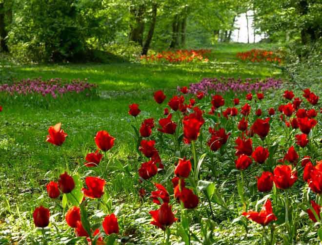 bonjour à tous mes amis(e)s ...je vous souhaite une excellente journée de jeudi ..bisous Colimar