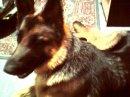 Photo de les--chiens