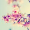 Le Jacquard aux fleurs