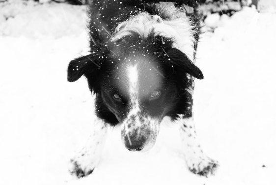 Quand il neige je suis une gamine. memories-Shoot 12 Decembre 2010