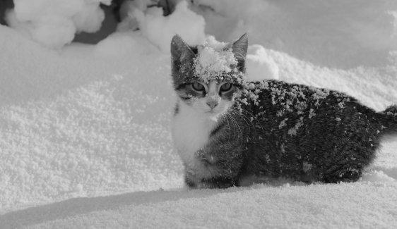 Chat neige en Bretagne( vive mon jeu de mots) Memories-Shoot Le 18 Decembre 2010