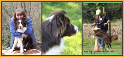 Happy Heaven border collie chocolat et blanc