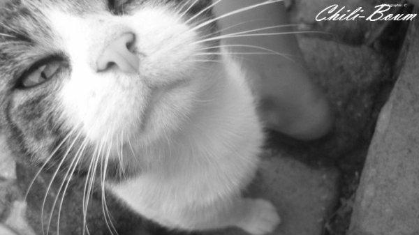 *Le chat ronronne le présent. Le chat est toujours dans aujourd'hui... Le chat mijote et ne bout jamais. Le chat est un animal concentré, un poêle à combustion lente.