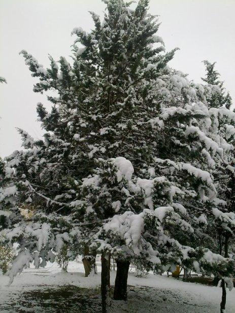 la neige a setif