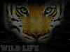 WildLife-skps4