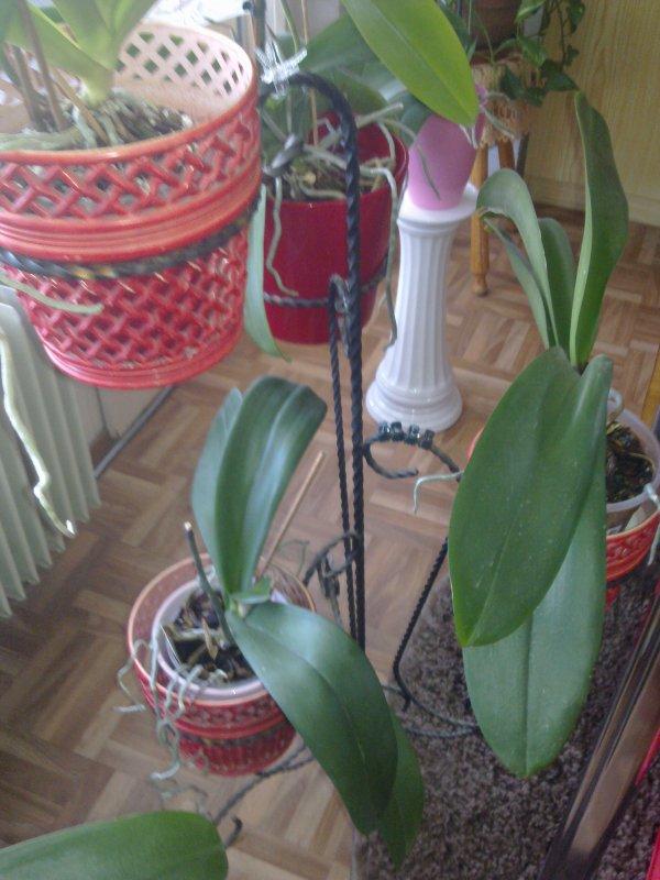 coucou mes amies je recherche une tag re jardini re pour mes orchid es 4 pces minimum le. Black Bedroom Furniture Sets. Home Design Ideas