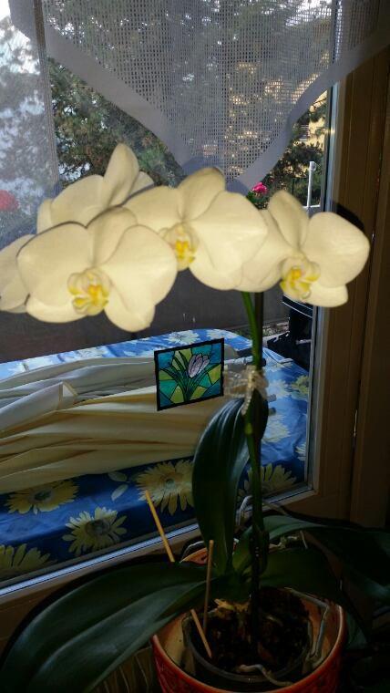 2ème floraison depuis le début de l'année