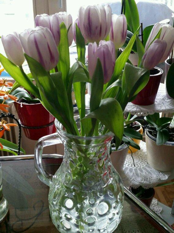 Petit truc pour wue vos tulipes gardent la tête haute. N'oubliez pas de retirer l'épingle après avoir transpercé la tige.