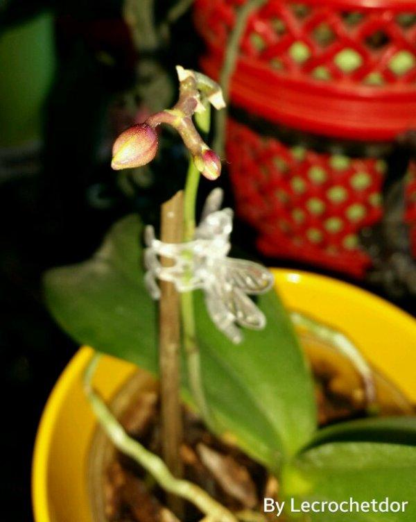 Rallonge de ma miniature orchidées avec 2 nouveaux boutons