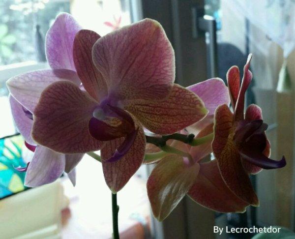 Rallonge de la hampe avec 3 premières fleurs dans le rose et mtn 3 nouvelles fleurs dans le ton orangé