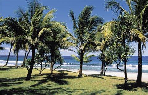 Grand Anse , le sud de l'île