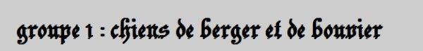 Groupe 1 : Chiens de Berger et de Bouvier