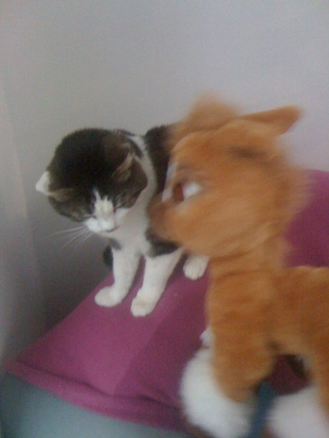 notre chat avec toffy oh la tete