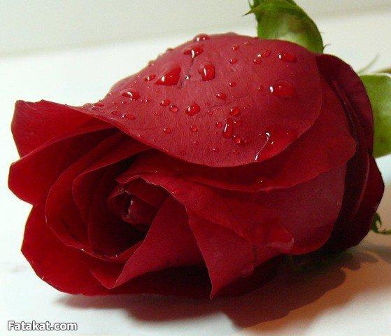 Fleur d'amour azadin