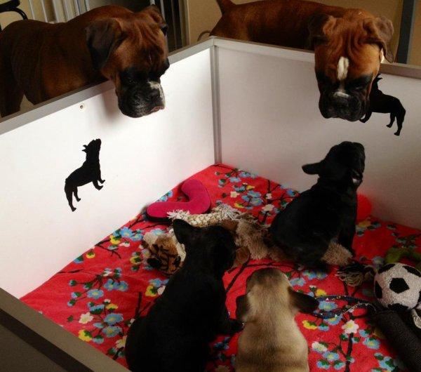les boxers visite la nurserie