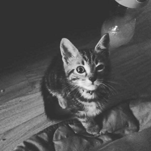 Mon petit Bebe ! ( Jack )