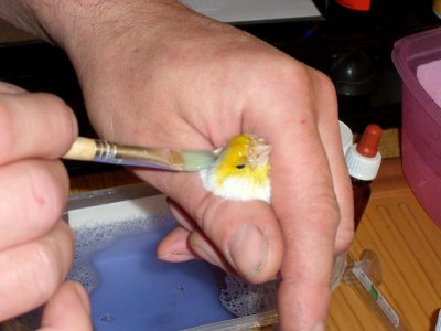 Lavage d'agathe opal jaune mosaique type 2