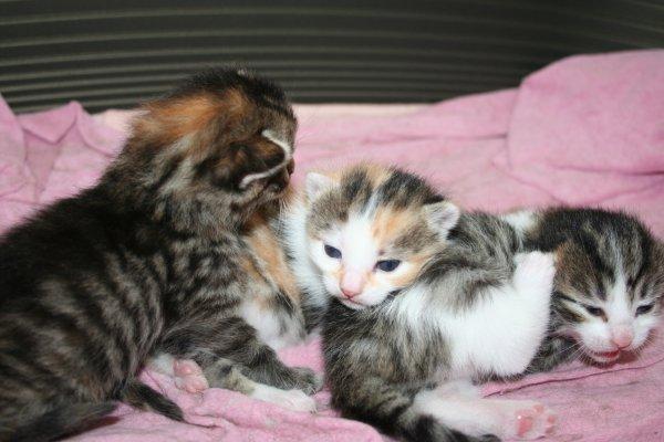 Lilas et ses petits