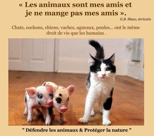 Protégeons les.
