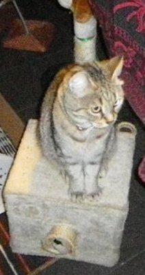 déjà 30 demain semaine demain que tu es partie mémère - Hommage as mémère une de mais chatte décède