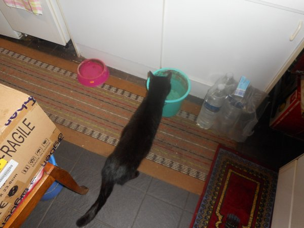 le frere de zoe est arrivee chez nous sa se passe mal avec lui et zoe mais avec moi il est deja franc dans la maison as peine arriver