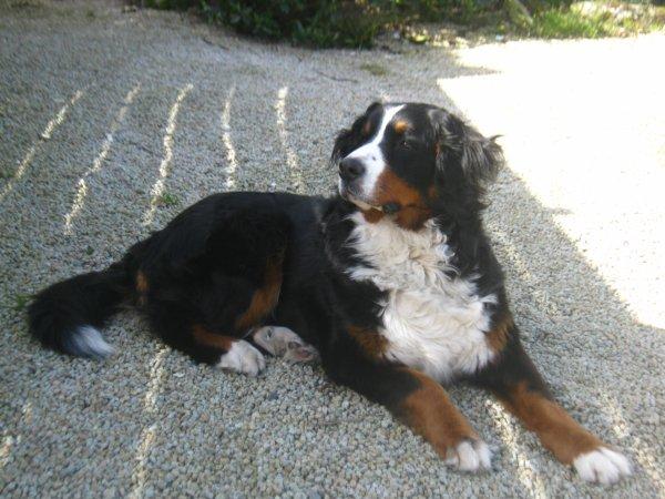 Le plus beau chien du monde blog de notrelouloue1 - Le plus beau coup franc du monde ...