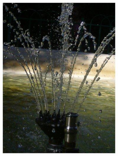 jardin des plantes (samedi ) EAU... mais pas hoooooooo