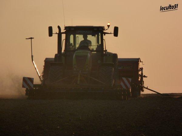 semis de  blé de betteraves