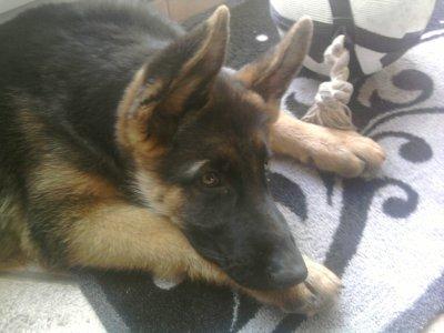 mon chien que jaime tres fort